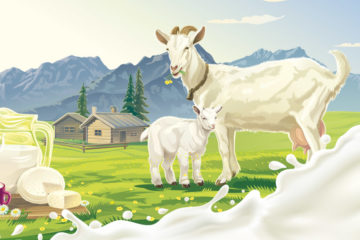 Vposlední době je zvýšený zájem o kozí mléko a výrobky zněho. Kozí mléko je považováno za zdravější než kravské mléko. Je to pravda?
