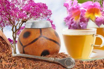 Léčivé účinky kůry ze stromu Lapacho znali již staří Indiáni. Dnes se lapacho užívá jako lék i jako čaj pro osvěžení a posílení těla.