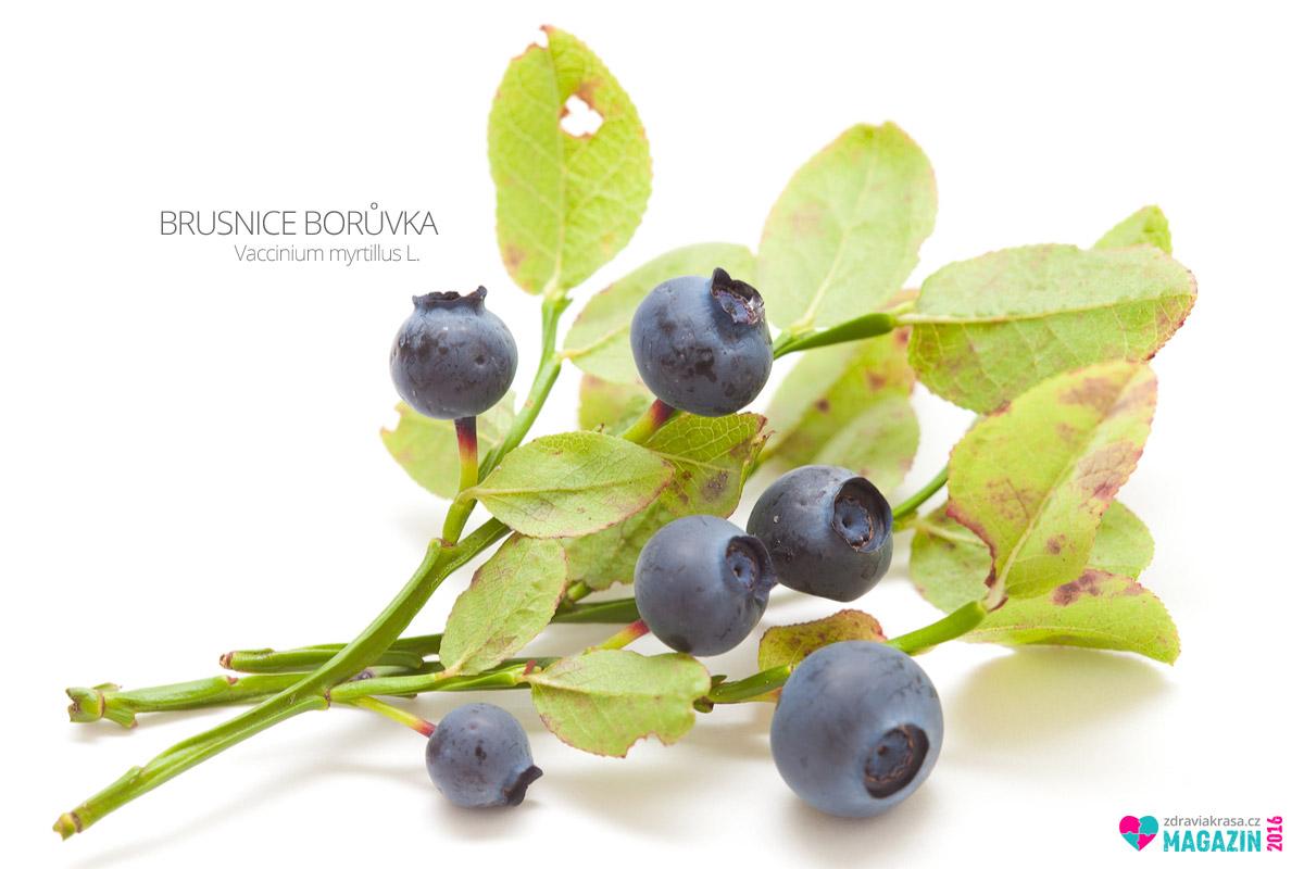 Brusnice borůvka (lat. Vaccinium myrtillus L.)