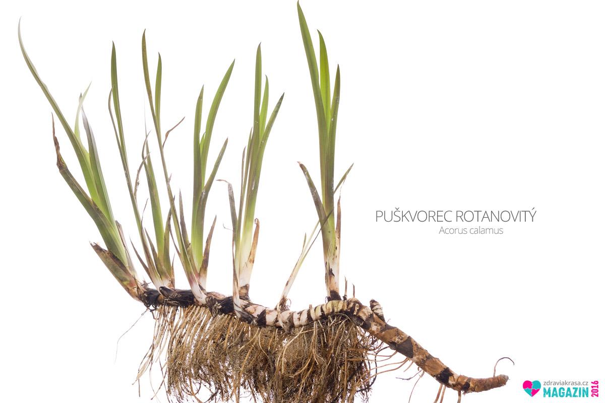 Puškvorec rotanovitý (lat. Acorus calamus)