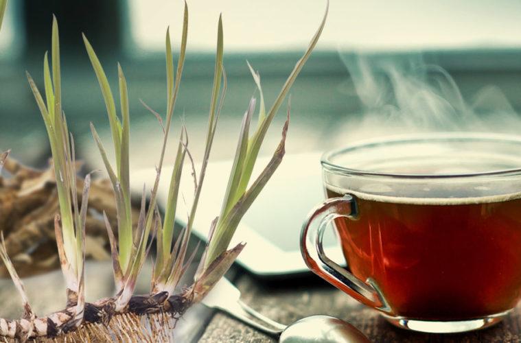 Trápí vás problémy se žaludkem a trávícím traktem? Namíchejte si žaludeční čaj, jehož základ tvoří hořká bylina puškvorec obecný.