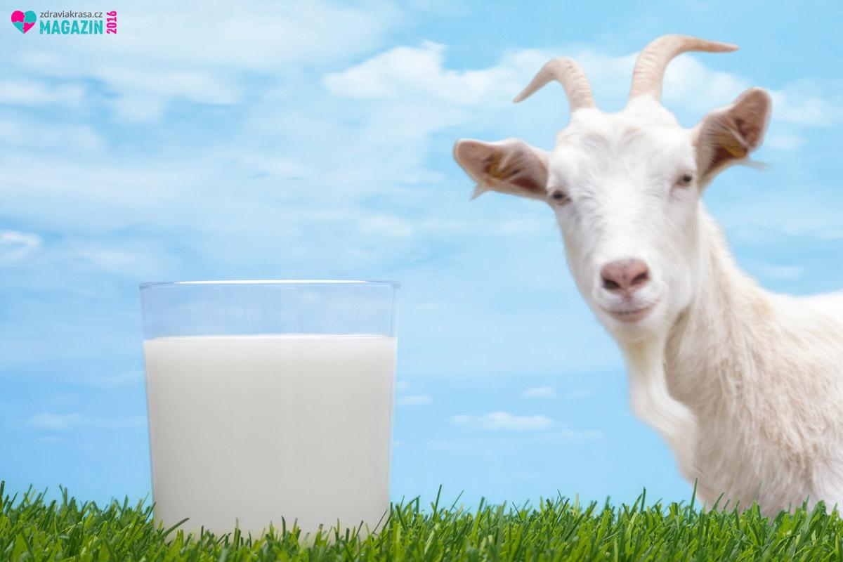 Vědcem vrtá v hlavě, jak to, že jsou kozy jedny z mála zvířat, které netrpí rakovinou. I proto zkoumají možnosti kozího mléka při prevenci a léčbě rakoviny.