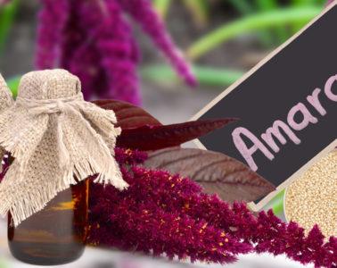 Amarantový olej je pro svůj vysoký obsah živin a zejména skvalenu velmi léčivým a zdraví prospěšným produktem, je zdrojem mládí a dlouhověkosti.