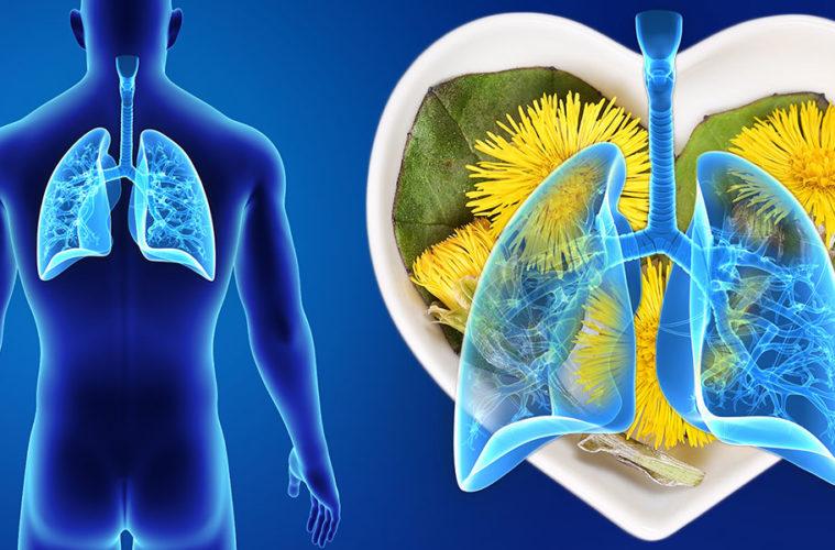 Znáte léčivé účinky podbělu lékařského? Mimo jiné je to specialista na nemoci horních dýchacích cest.
