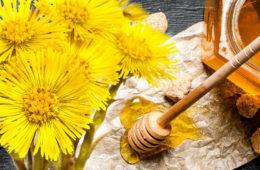 Podbělový med – recept na vařený i nevařený med z podbělu