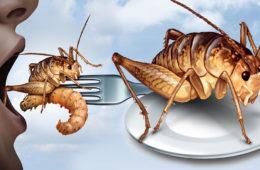 Dejte si na zub cvrčka, včelu, můru nebo švába. Od letošního roku povýšili podle zákona na úroveň jatečního skotu, drůbeže nebo jiného na maso chovaného zvířectva. Jedlý hmyz se stává součástí evropského i českého jídelníčku.