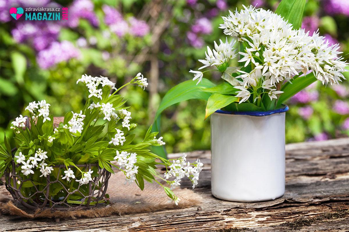 Česnek medvědí si lze vypěstovat i doma v květináči.
