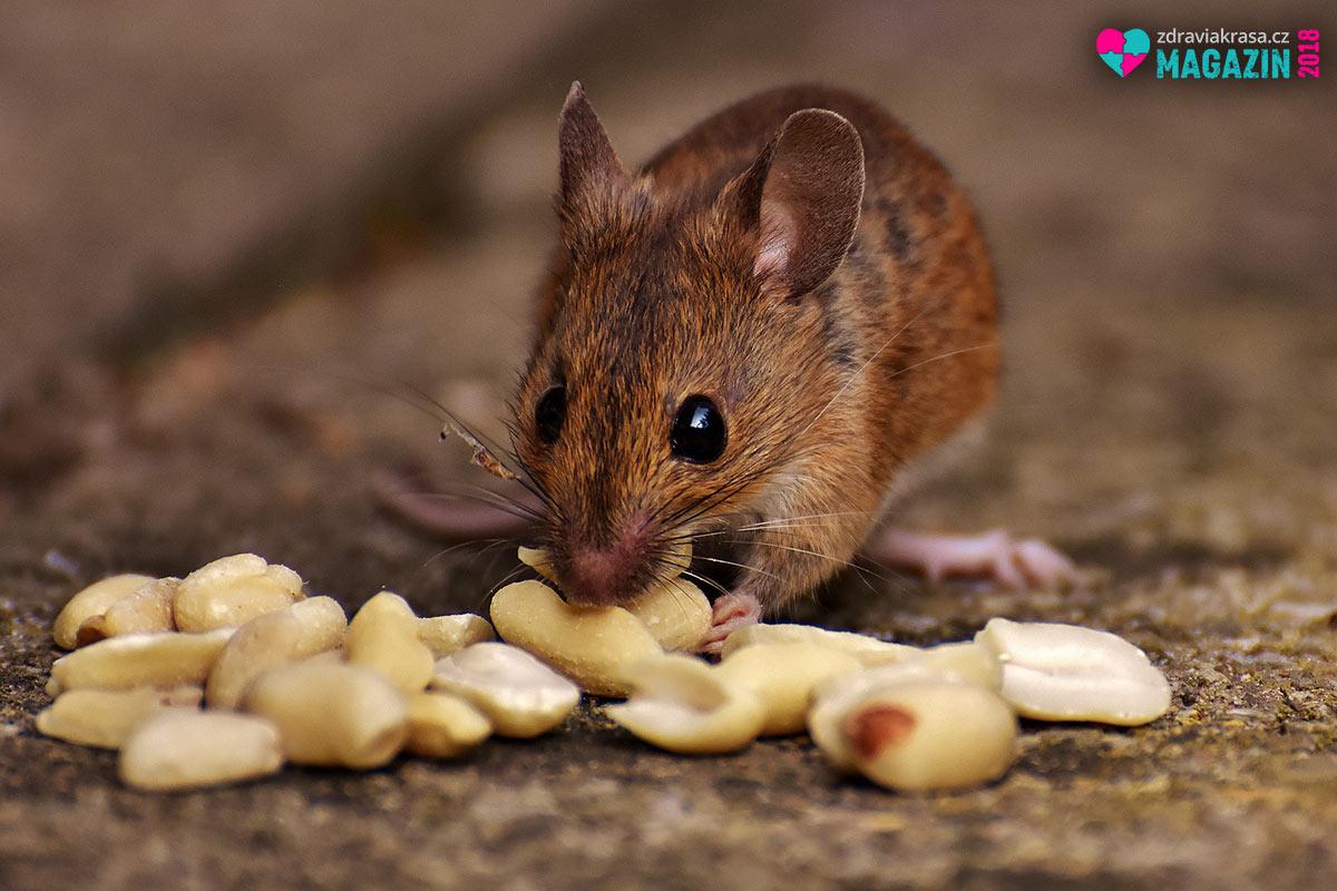 Negativní vliv obezogogenů potvrdili vědci na myších.