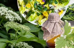 Bršlice kozí noha není jen obtížný plevel. Patří mezi jedlé plevele a zajímavé léčivé rostliny, které využijete když vás trápí dna, podagra, otoky, záněty, diabetes 2. typu, močové a ledvinové kameny, hromadění vody v těle nebo když potřebujete zhubnout.