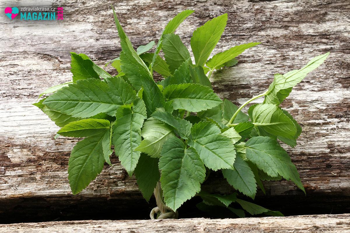 Aegopodium podagraria využijete ve své domácí lékárničce i v kuchyni.