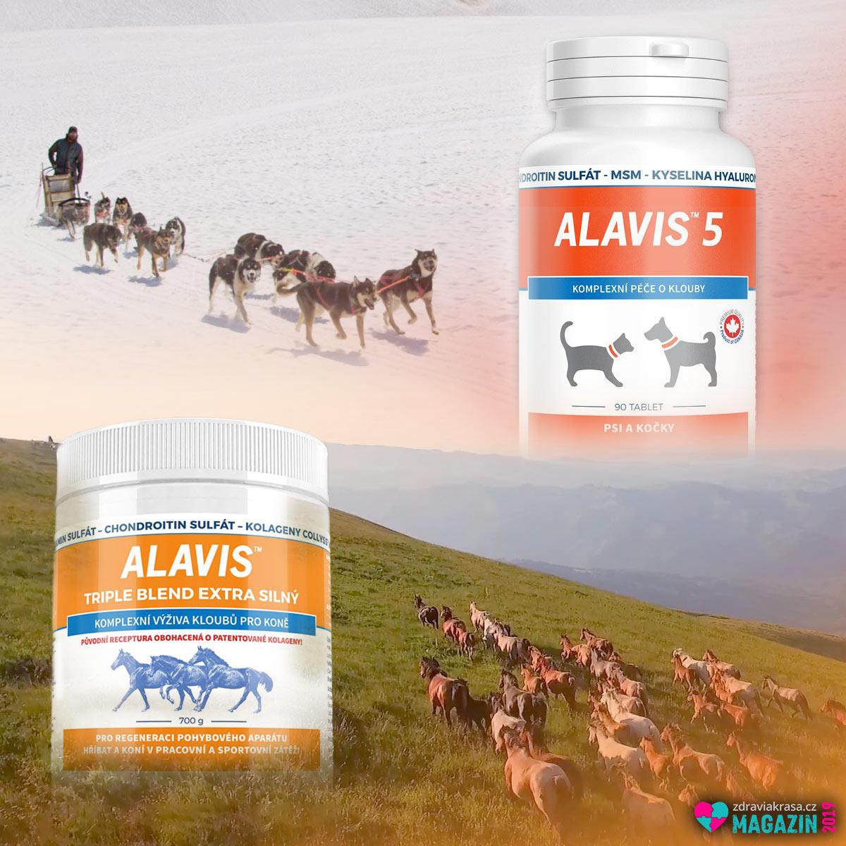 Alavis pomáhá koňům, psům i kočkám od bolestí kloubů.