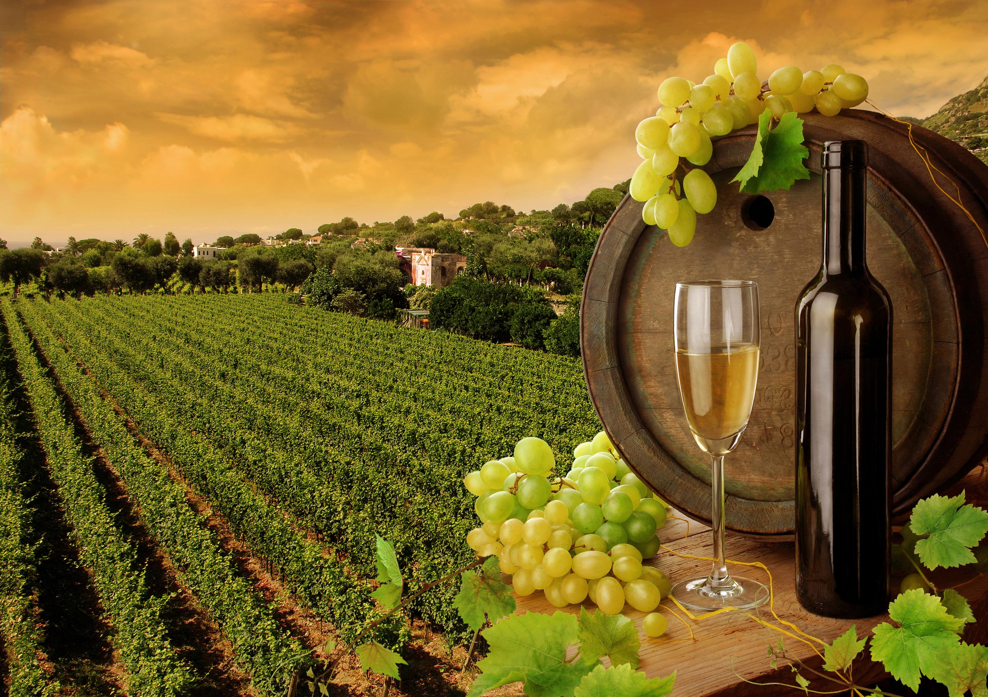 Bílé víno a zdraví: Pokud jde o snižování výskytu kardiovaskulárních onemocnění, má bílé víno podle posledních studií navrch před vínem červeným.